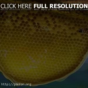 3D — пчелиные соты
