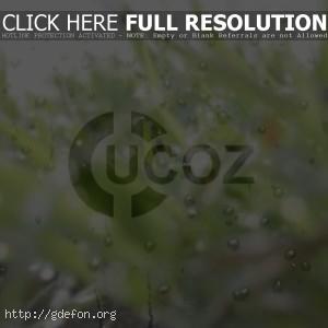 Логотип Ucoz