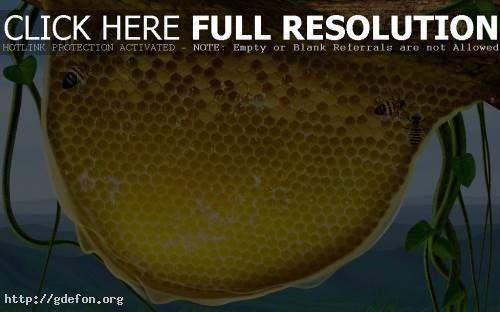 Обои 3D — пчелиные соты фото картики заставки