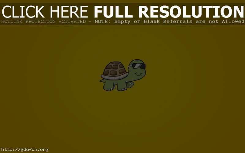 Обои черепаха фото картики заставки
