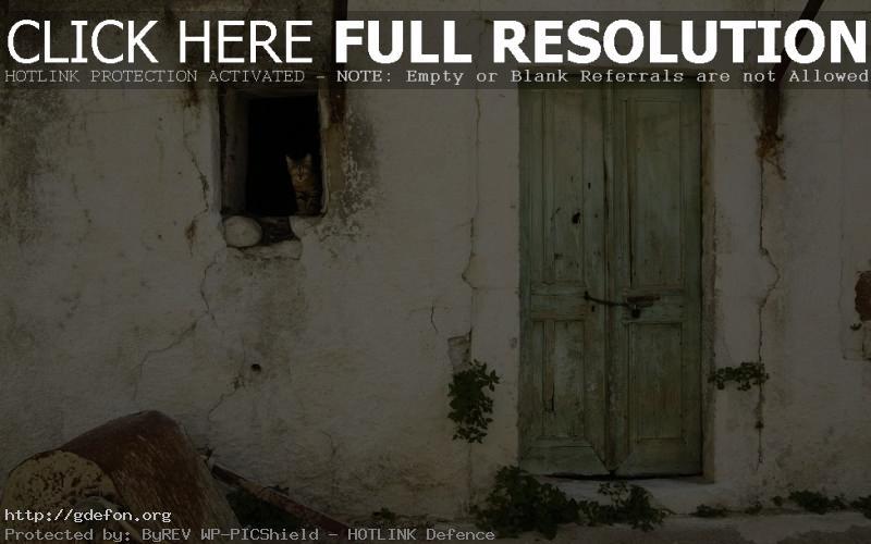 Обои дверь, стена, окно, кошка фото картики заставки