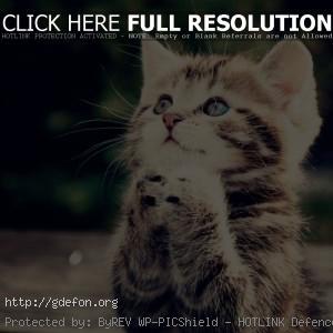 котенок молится