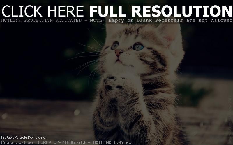Обои котенок молится фото картики заставки