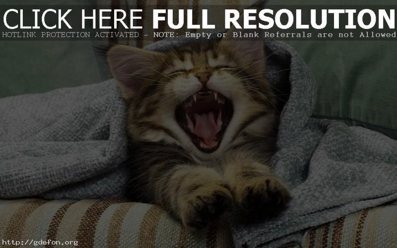Обои котенок в полотенце фото картики заставки