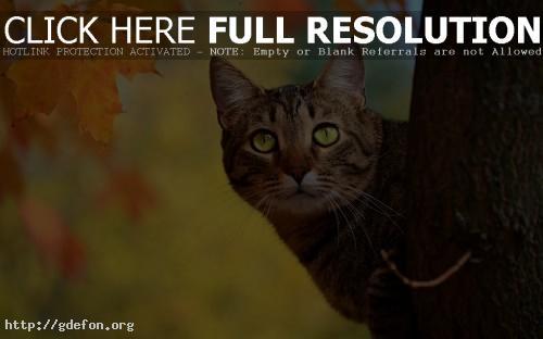 Обои Кот на дереве фото картики заставки
