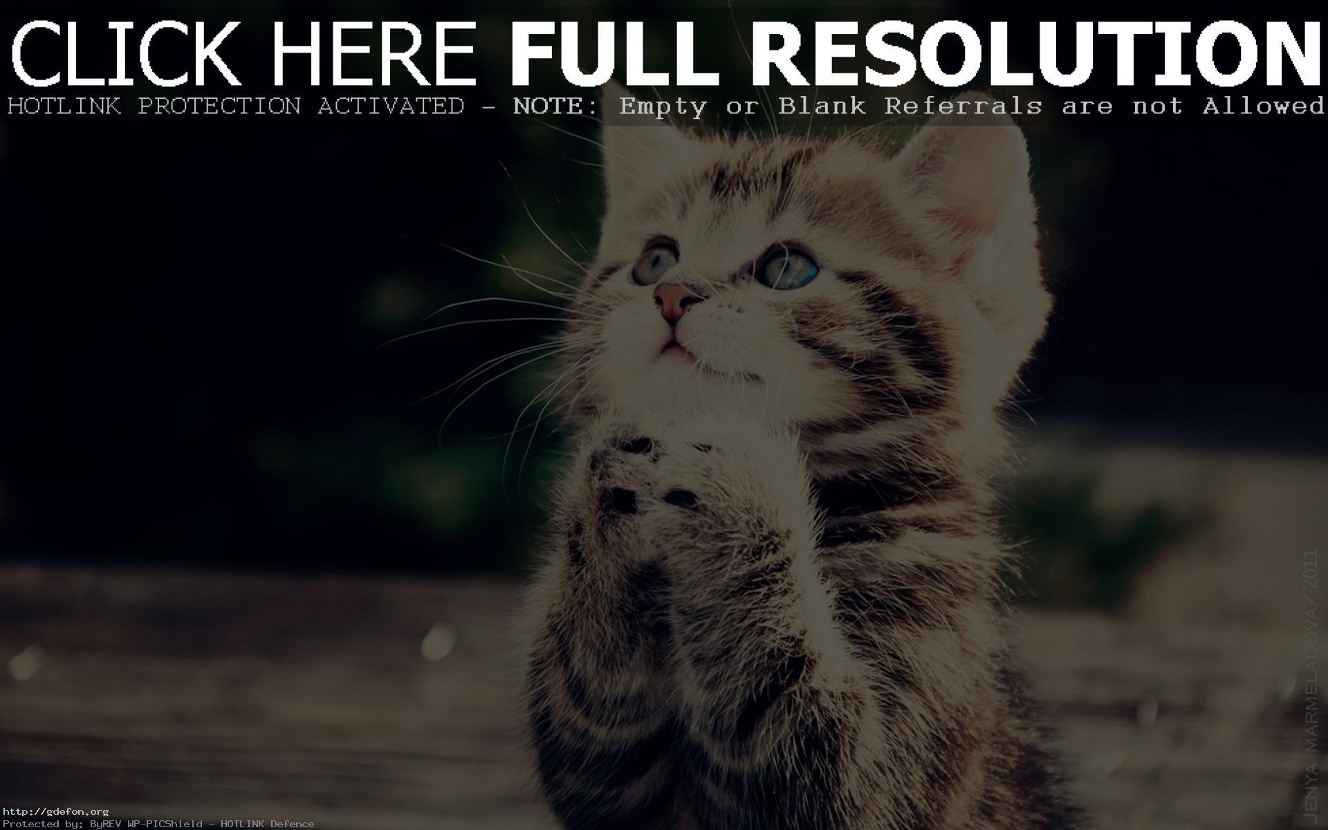 bebe chat Mais adopter un chat de race, ce n'est pas seulement opter pour une morphologie, c'est aussi choisir un comportement : les éleveurs, grâce à une sélection sur des générations, ont travaillé sur les spécificités de chaque race et développé sa socialisation et son lien privilégié avec l'homme.