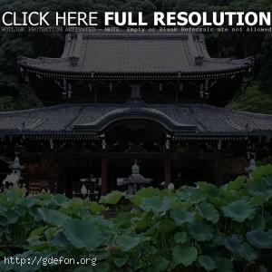 Япония, храм, лес