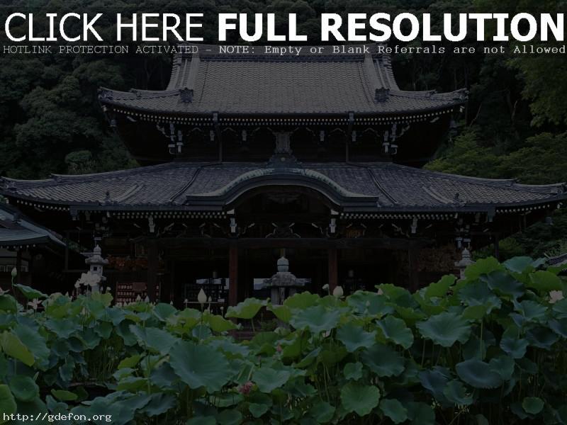 Обои Япония, храм, лес фото картики заставки