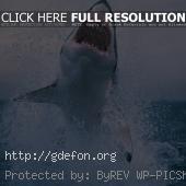 Белая акула выпрыгивает из-под воды