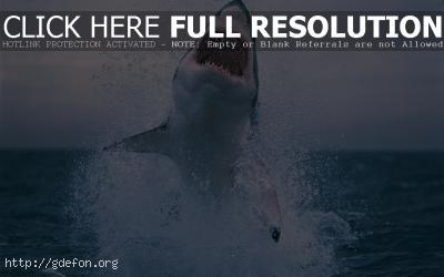 Обои Белая акула выпрыгивает из-под воды фото картики заставки