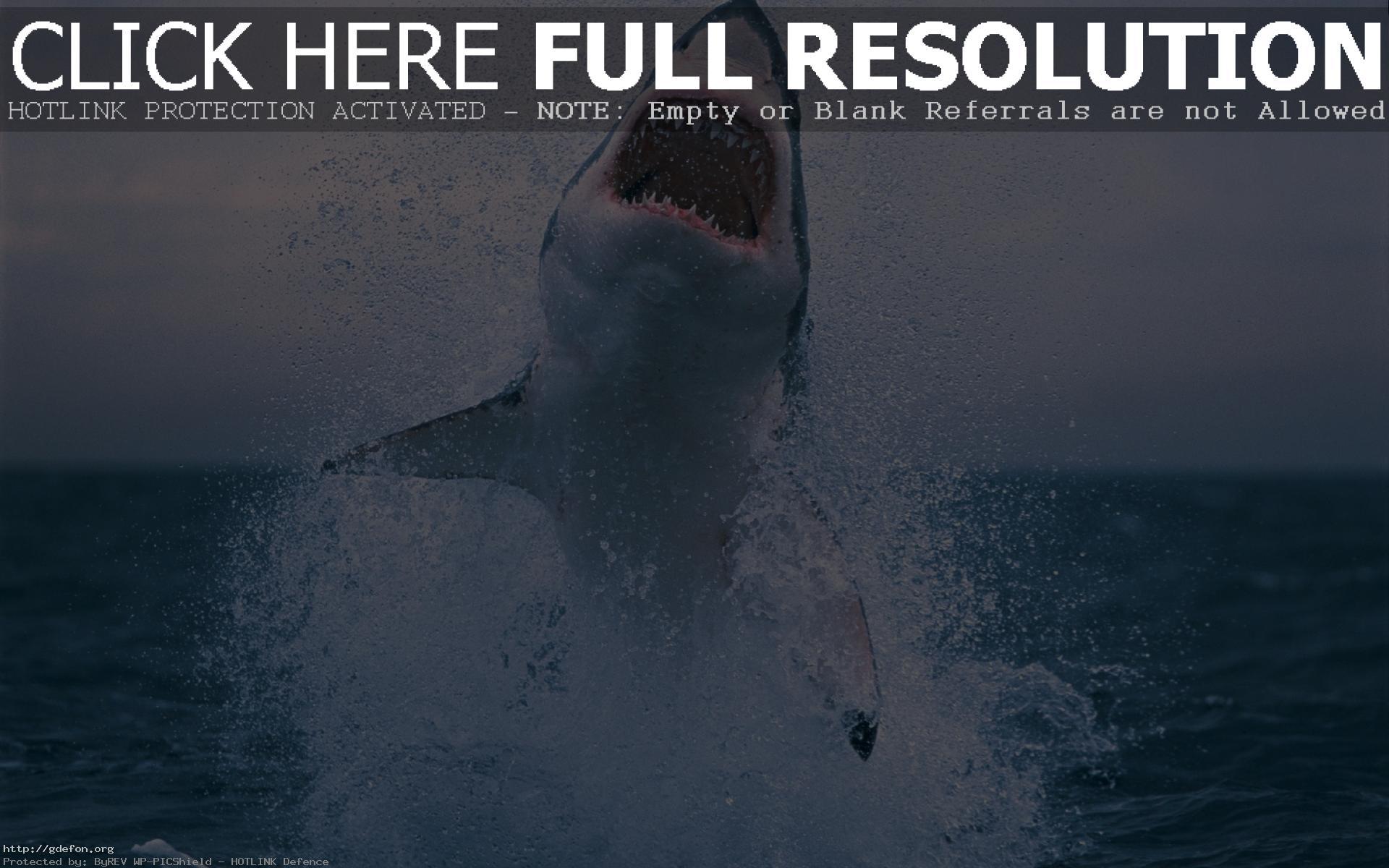 Скачать акулы фото.