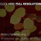 Красный, листья, осень