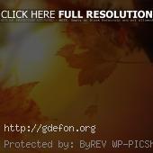Листья, осень, солнце