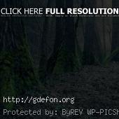 Огромные стволы деревье покрытые мхом