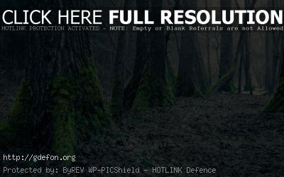 Обои Огромные стволы деревье покрытые мхом фото картики заставки