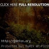 Озеро в саду в лучах солнечного свела
