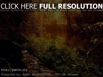 Обои Озеро в саду в лучах солнечного свела фото картики заставки