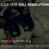 Притаившийся черно-белый кот