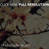 Цветущая ветвь дерева