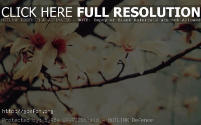 Обои Цветущая ветвь дерева фото картики заставки