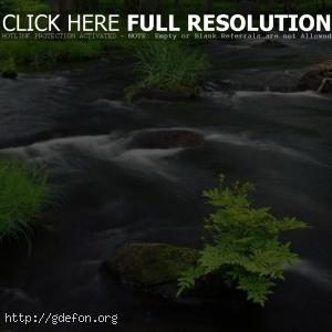 Быстрый лесной ручей