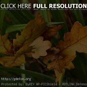 Листья, осень, зеленый