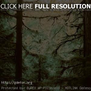 Картина, деревья, чаща