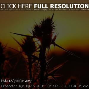 закат, трава, бурьян
