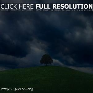 Одинокое дерево на холме