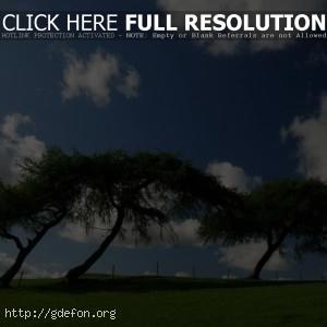 Небо, зелень, деревья