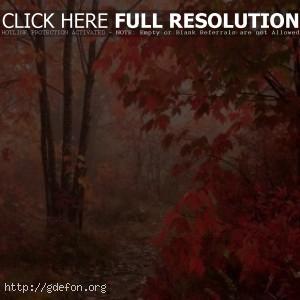Клен, листья, осенний, лес