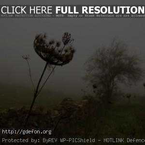 Трава, забор, дерево, туман