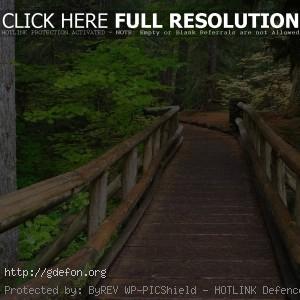 Мост, лес, деревья, тропа