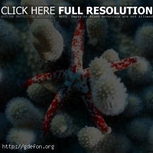 Морская, звезда, кораллы