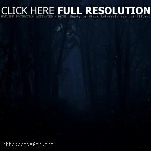 Ночь, свет, лес, луна