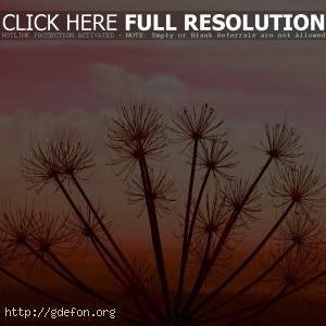Растение, закат, небо