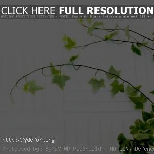 Листья, растение, ветки