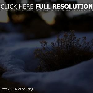 Трава, куст, снег, зима