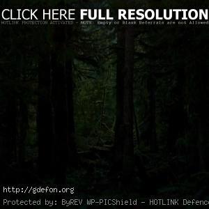 Густая чаща леса