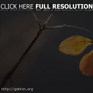 Ветка, паутина, осень
