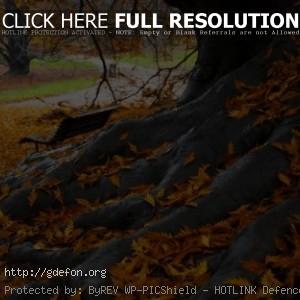 Парк, листья, корни старого дерева