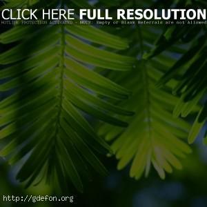 Листья, пальма, свет