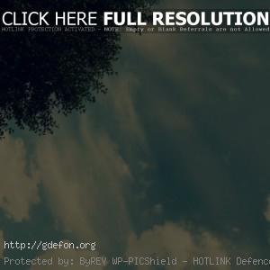 Небо, дерево, свет, облака