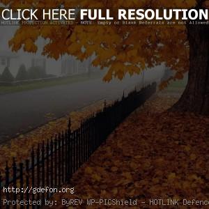 Осень, клен, листья, дорога, дерево