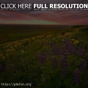 Невероятный закат и цветы.Скачать