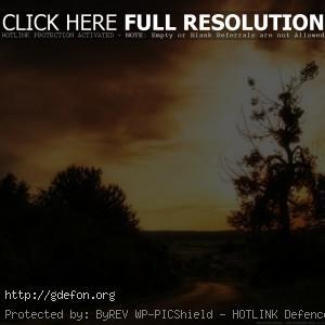Закат, солнце, небо, дерево, кусты, дорога