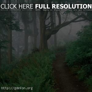 Лес, тропа, папоротник, туман