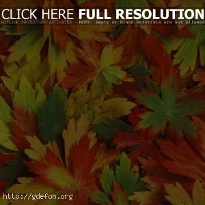 Калейдоскоп, листья, осень