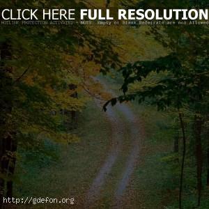Листья, осень, деревья, дорога