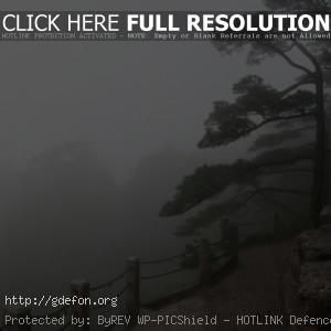Туман, склон, деревья